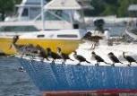 rail_birds